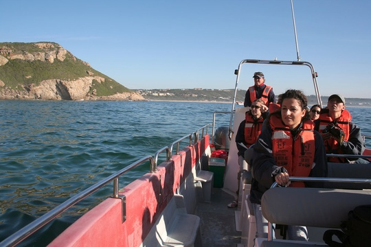 Boat-based whale watching, Plettenberg Bay
